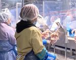 Các nhà máy chế biến thịt tại Mỹ ứng phó với dịch COVID-19