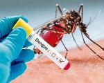 Sốt xuất huyết - Bệnh mùa hè không nên chủ quan