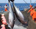 Xuất khẩu cá ngừ Tây Ban Nha giảm do ảnh hưởng bởi COVID-19