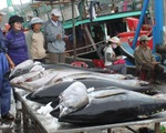 EU sẽ miễn thuế cho 11.500 tấn cá ngừ đóng hộp sang EU
