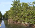 Khánh Hòa: Cộng đồng làng biển giữ rừng ngập mặn