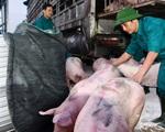 Nguồn lợn thịt Thái Lan còn ít: Không nên kỳ vọng giá lợn giảm mạnh - ảnh 3
