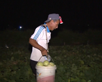 Nông dân làm đêm tránh nắng: 'Là nông dân nhưng cũng sợ nắng lắm!'