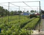 Quản lý giống cây trồng cần những chế tài đủ mạnh