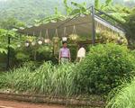 Mô hình farmstay - Du lịch nghỉ dưỡng hay hình thức biến tướng để lấn chiếm đất rừng? - ảnh 3