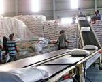 Giá gạo xuất khẩu Việt Nam vươn lên dẫn đầu thế giới - ảnh 2