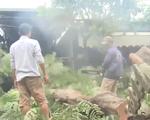 Đà Nẵng khắc phục cây ngã đổ sau mưa lớn