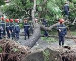 Hơn 15.000 cây đổ ngã, gây tắc nghẽn nghiêm trọng do bão số 5