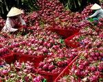 Hết 'tắc đường', khơi thông xuất khẩu trái cây sang Mỹ