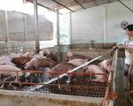 """Lợn hơi tiếp tục tăng giá, tiểu thương chấp nhận """"đạp giá đẩy hàng"""" - ảnh 3"""