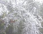 Rét đậm, rét hại gây thiệt hại cho các tỉnh vùng cao