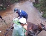 Yêu cầu Thừa Thiên - Huế làm rõ nguyên nhân trâu bò chết rét nhiều