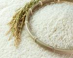 Xuất khẩu gạo giảm khối lượng, tăng chất lượng