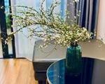 Những loại hoa chơi Tết dành cho... nhà nghèo - ảnh 11