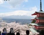 Người Nhật Bản đổ xô đi ngắm hoa anh đào bất chấp dịch bệnh