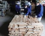 Kiểm soát tính hợp pháp của gỗ nhiệt đới nhập khẩu - ảnh 2