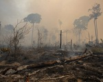 Rừng Amazon thải nhiều carbon hơn lượng khí thải hấp thụ - ảnh 2