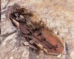 Phát hiện hài cốt của nạn nhân bị cá mập tấn công có niên đại 3.000 năm - ảnh 2