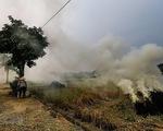 Bộ Tài nguyên và Môi trường yêu cầu xử lý nghiêm việc đốt rơm, rạ gây ô nhiễm