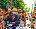 Bắc Giang thay đổi cách tiêu thụ vải thiều