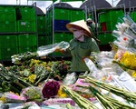 Hàng vạn cành hoa Đà Lạt buộc phải tiêu hủy