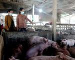 Giá thức ăn tăng 'chóng mặt', người chăn nuôi 'treo chuồng'