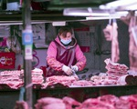 Nguồn cung phục hồi mạnh, giá lợn Trung Quốc lao dốc