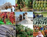 Thúc đẩy xuất khẩu nông sản những tháng cuối năm - ảnh 2