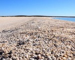 4 bãi biển 'vỏ sò' độc đáo nhất thế giới