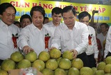 Phu Tho province holds fair to promote Doan Hung pomelos