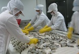 31 Vietnamese shrimp exporters to US enjoy 0% tax