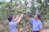 Thừa Thiên - Huế triển khai nhiệm vụ phát triển nông nghiệp