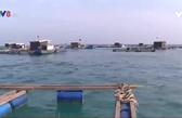 Nghề nuôi trồng thủy sản ở Lý Sơn