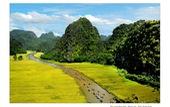 Ngắm cánh đồng lúa ở Tam Cốc, Ninh Bình đẹp như tranh vẽ