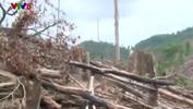 Phá rừng ở Quảng Nam