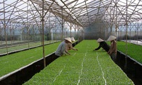 Agriculture sector aims to reduce greenhouse gases