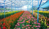 Improving technology to boost Dalat flower industry