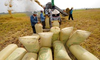 Farmers in the central region seek to raise rice quality