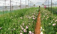 High-tech farming increasingly adopted