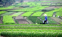 Promoting multifunctional agricultural cooperatives with Japan