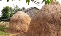 Paper from straw and hay