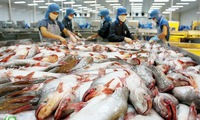 Tra fish supply chain proves effectiveness