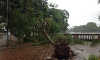 Hanoi: One dead, five injured by typhoon-triggered downpour