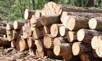 Thousands benefit from developing wood industry in Quang Tri Province