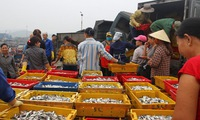 Preferential loans offered for seafood storage
