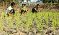 Quang Tri converts crops to cope with drought