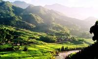 Central Highlands forestland to be rejuvenated