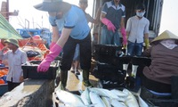 Quang Binh seafood stockpile woes