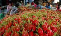 Australia considers dragon fruit imports from Vietnam