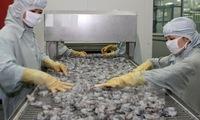 Japan consumes most Vietnamese shrimp